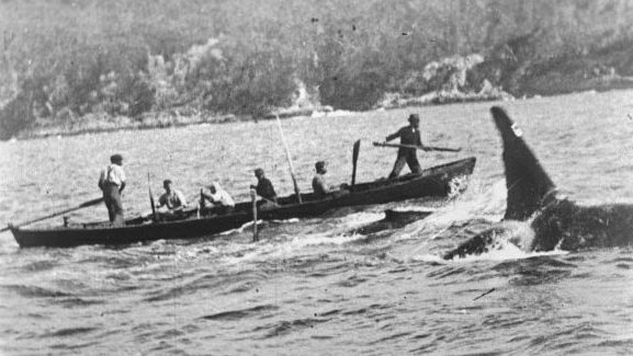 History of Whaling in Twofold Bay 1