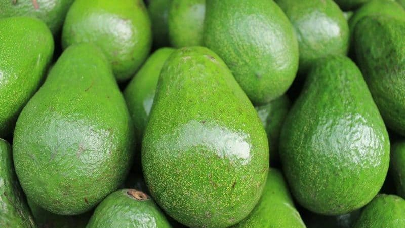 The History and Origins of Avocado Oil | History Cooperative